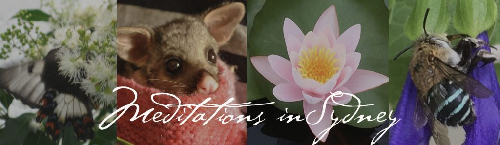 Sydney Guided Healing Meditation by Nature - Senka