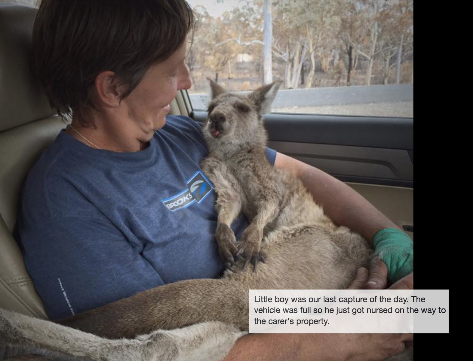 Thank you meditation for saving Australian wildlife that has survived the wildfires