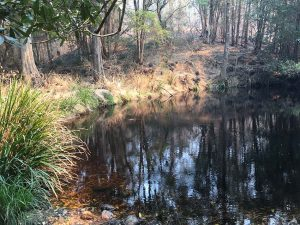 Pond Survivors at Doyles Creek Once a Flowing River