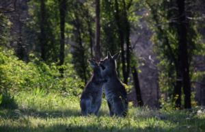 Cobargo-Wildlife-Sanctuary-distant healing meditation